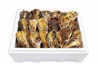 [殻付き牡蠣]Lサイズ(大)30個《加熱用》