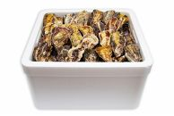 【ご自宅用】[殻付き牡蠣]Lサイズ(大)100個《加熱用》