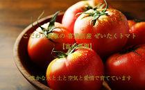 2020年受付開始!こだわり農家の喜茂別産ぜいたくトマト【富田農園】