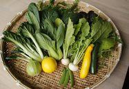 麻王伝兵衛「季節の野菜セット」
