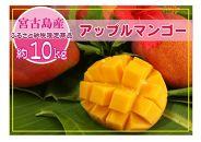 ★早期先行予約★アップルマンゴー10kg