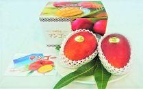 沖縄県糸満産 アーウィンマンゴー約1kg