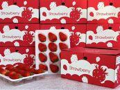 滋賀県 竜王産の苺がまるごと楽しめる!苺食べ比べセット