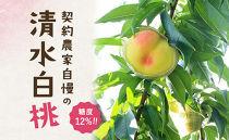 ★7月発送★【糖度12%!!】契約農家自慢の清水白桃 (約4kg)