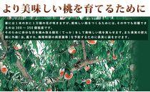 ☆先行予約☆和歌山県産白鳳6~9玉入り≪秀品≫【2021年7月上旬以降発送】