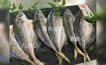 紀州湯浅旬の前浜物にこだわった鮮魚問屋のアジの干物セット