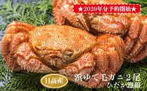 ★2020年分受付開始★日高産浜ゆで毛ガニ2尾セット(ひだか漁組)