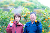蛍飛ぶ町から旬の便り 有田みかん(10kgSサイズ) 平武農園