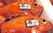 【2020年4月下旬発送開始】<網走産>高級ブランド≪活〆釣きんき≫【500g×2尾】