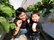 【八ヶ岳フルーツ農園】イチゴ狩りチケット 2名様分(小学生以上)