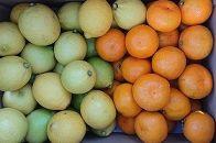 瀬戸田レモン3kgと季節の柑橘2kg