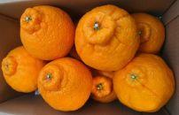 柑橘の王様 大玉・濃厚な不知火(でこぽん)3kg