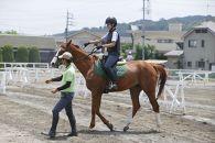 【2名様ペア】八王子乗馬倶楽部で乗馬の感動を!「乗馬体験」お試し2回コース