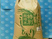 令和元年度産 近江米こしひかり(玄米)30kg
