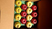 「リンゴのふくさわ」ギフト大玉13~14玉サンふじ、金星、王林、特選品詰め合わせ