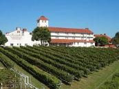 神戸ワイン ブドウ栽培・収穫体験(2020年度)