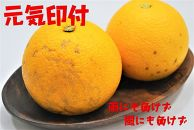 元気印付有田の八朔【優品】大玉5kg
