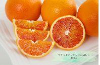 ブラッドオレンジ<お試し>約3kg ※2021年3月下旬より出荷開始予定