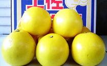 高知県産土佐文旦 ご家庭用10kg