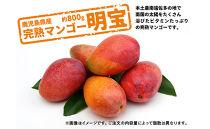 【期間限定】【訳あり】鹿児島県産完熟マンゴー<明宝>約800g以上
