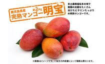 【期間限定】【訳あり】鹿児島県産完熟マンゴー<明宝>約2Kg以上