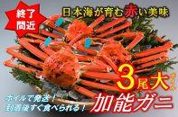 加能ガニ大(ずわいがに)3尾(ボイル)【漁獲次第発送】