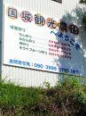 国城観光農園 紀の川柿9個入り(2L~3Lサイズ)