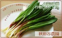 希少!山菜の王様行者にんにく1Kg【秋田谷農園】