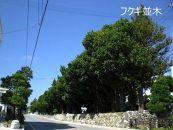 八重瀬町JALふるさとクーポン12000&ふるさと納税宿泊クーポン3000