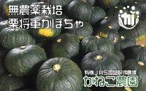 無農薬栽培!栗将軍かぼちゃ 玉6個入り(約10kg)【かねこ農園】