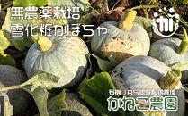 無農薬栽培!雪化粧かぼちゃ 玉6個入り(約10kg)【かねこ農園】