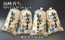 DD016海峡育ち「知内生かき350g4本セット」【上磯漁業協同組合】