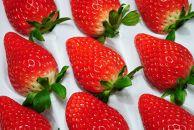 【数量限定】完熟イチゴ『琴雫』(きんのしずく)