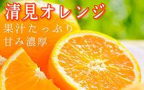 清見オレンジ7.5kg 和歌山県から農園直送! まごころ産直みかん