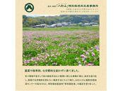 奈良・橿原 農薬や化学肥料不使用【令和2年産】ヒノヒカリ【玄米】5㎏×2袋
