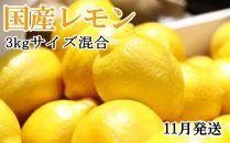*11月発送*【手選別・産直】紀の川産の安心国産レモン約3kg