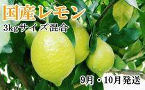 *9月・10月発送*【手選別・産直】紀の川産の安心国産レモン約3kg