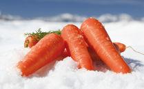 【期間限定】雪下にんじん3kg 雪国津南の新鮮野菜