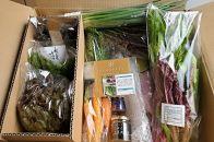 <週10セット限定>アンチョビ&松山市産オーガニック野菜詰め合わせセット