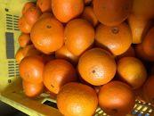 【2021年2月中旬以降出荷】果汁たっぷり!とってもジューシーな希少春柑橘『津之輝(つのかがやき)』 約5kg〈赤秀〉