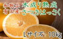 こだわりの和歌山有田産木成り完熟八朔「さつき」 Lサイズ10Kg入り