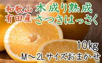 こだわりの和歌山有田産木成り完熟八朔「さつき」 M~2Lサイズおまかせ 10Kg入り