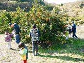 ≪耕作放棄地支援≫ みかんの木オーナー制度【返礼品:農薬を使わず育てたみかん3kg、みかん狩り一回無料券】