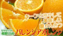 ■田村産バレンシアオレンジ[約7kg]湯浅町田村産/紀伊国屋文左衛門本舗[2020年6月下旬~発送]