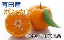 [厳選・春みかん]和歌山産ポンカン10kg(サイズ混合)