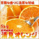 ★2021年発送★とにかくジューシー清見オレンジ 5kg
