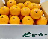 ★受付終了★究極の柑橘「せとか」!