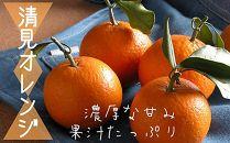 清見オレンジ10Kg・サイズお任せ 和歌山県より農園直送! まごころ産直みかん