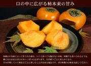 和歌山の種なし柿約7.5kg(秀品:サイズ・品種おまかせ)/紀伊国屋文左衛門本舗[2020年9月下旬~順次発送]