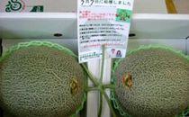 グリーンメロン<2玉>【平成新山メロンPREMIUM(とみちゃん厳選)】